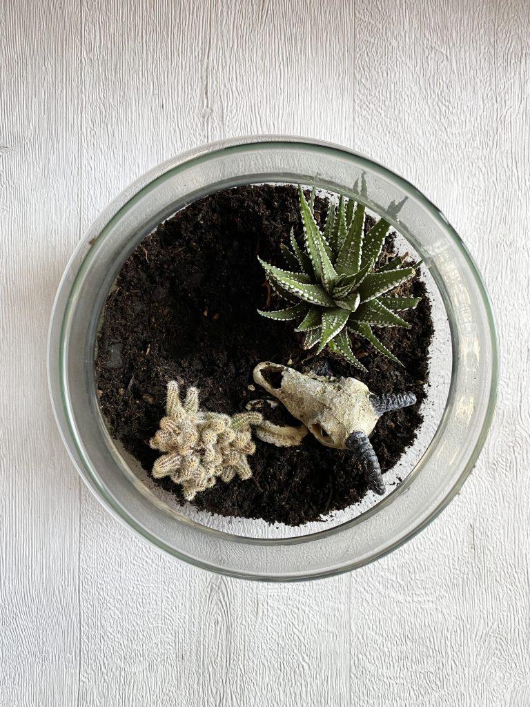 DIY Terrorium, mon terrarium spécial Halloween !